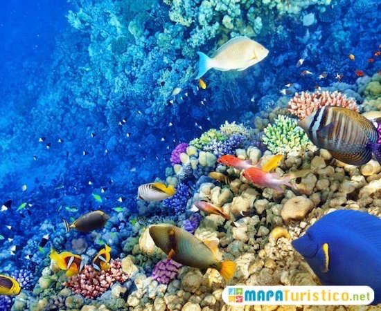 arrecife palancar