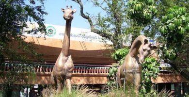 zoologico de guadalara
