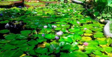El jardín Botánico caracas