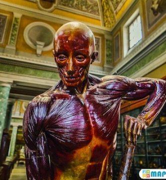 Museo Conservatorio de Anatomia