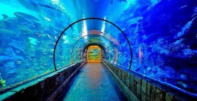 acuario shedd