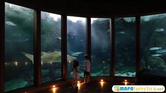 aquarium finisterrae coruna