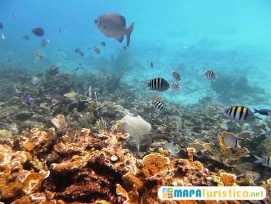 arrecife manchones isla mujeres 4