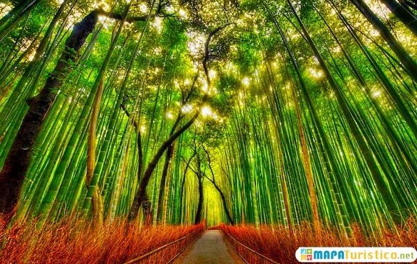bosque de bambu de arashiyama