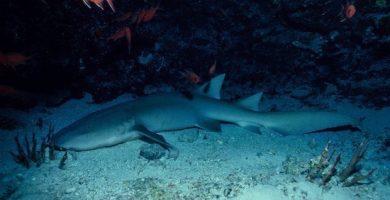 cueva de los tiburones dormidos 1