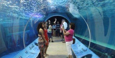 el acuario de mazatlan 1
