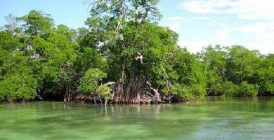 manglares del rio tecolutla