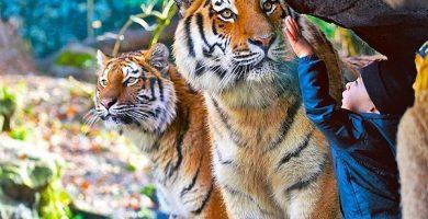 zoologico de zurich