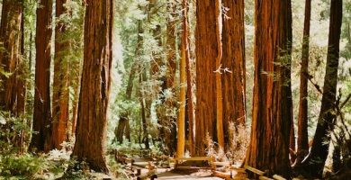 monumento nacional de muir woods