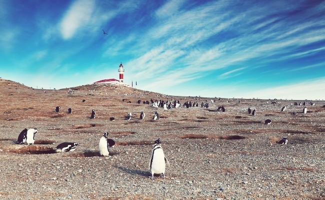 monumento natural los pinguinos centro de punta arenas