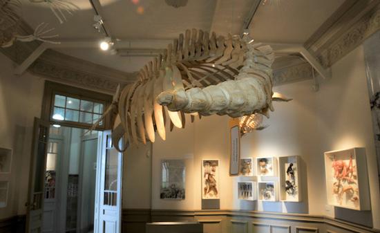 museo ciencias naturales madryn