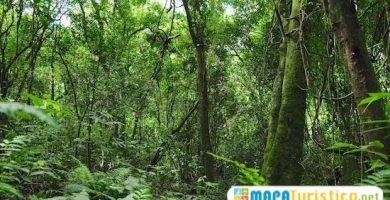 selva iryapu